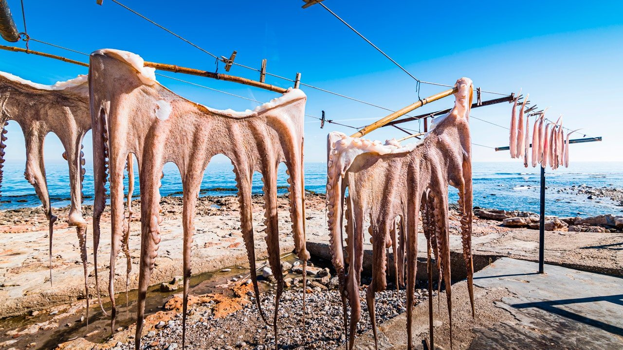 Octopus dried in the sun in the traditional way in Denia